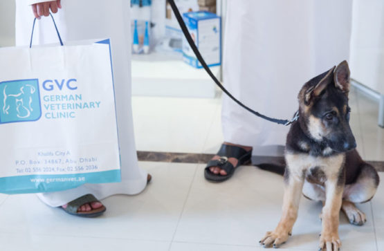 Pet health care plans in Abu Dhabi
