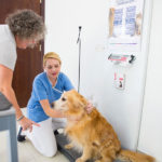Pet care in Abu Dhabi