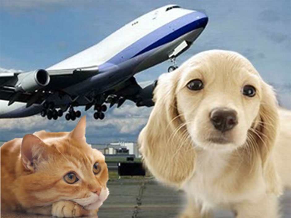 pet-transportation-services