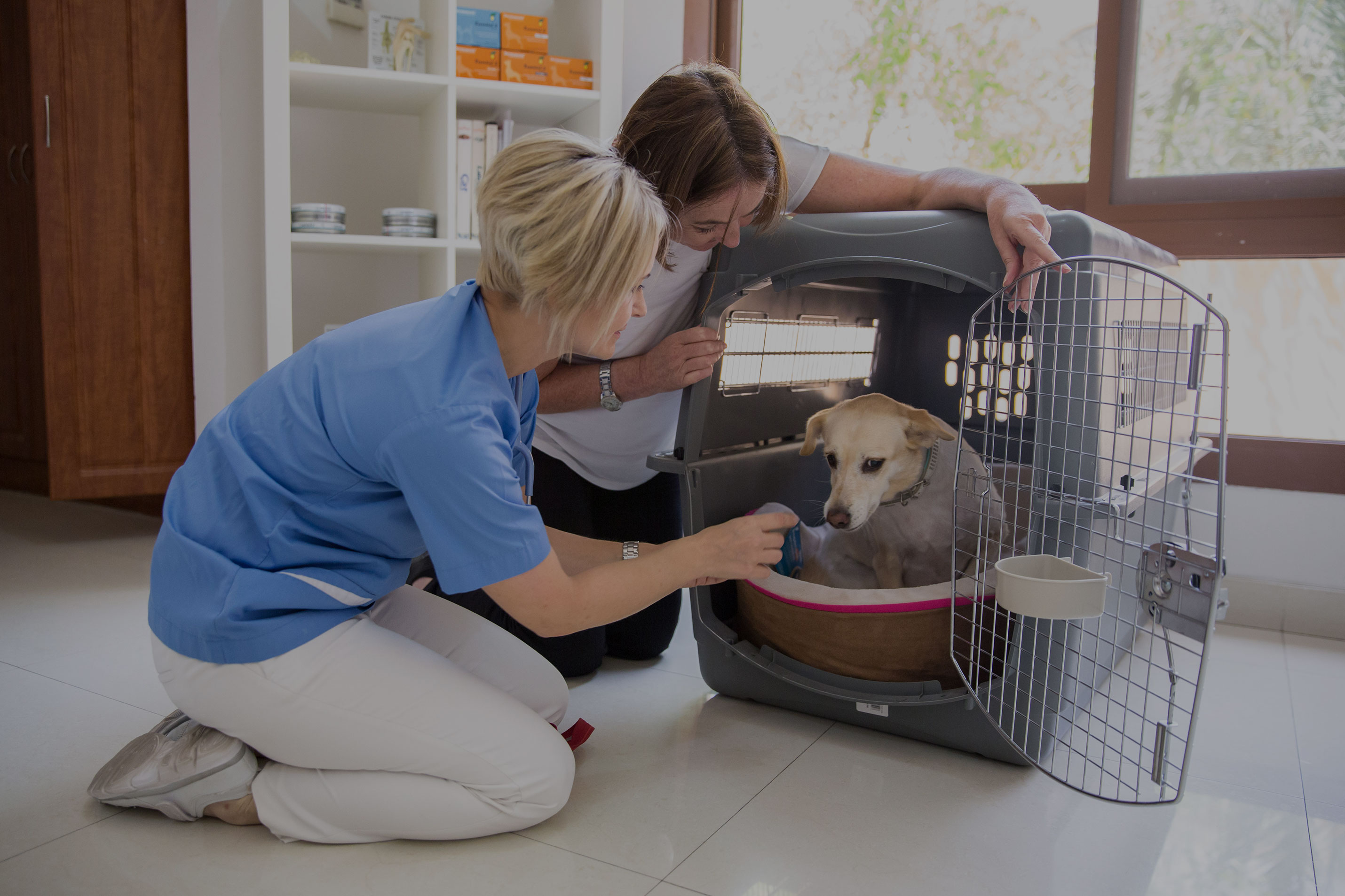 Best Veterinary Clinic in Abu Dhabi