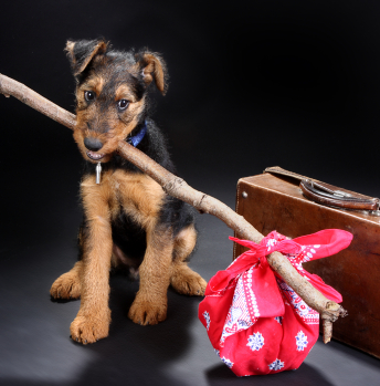pet relocation Dubai - Pet relocation Abu Dhabi - Pet transportation services in Dubai